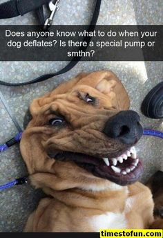funny dogs with captions . funny dogs and cats . funny dogs make me laugh Funny Animal Jokes, Stupid Funny Memes, Cute Funny Animals, Funny Relatable Memes, Cute Baby Animals, Cute Animal Humor, Animal Humour, Funny Shit, Really Funny Memes