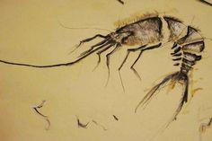 Webster - Sketch, carboncino/acrilico/china e vernice su carta, 2009