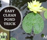 Keep Your Garden Pond Water Clear With Quilt Batting | Empress of Dirt