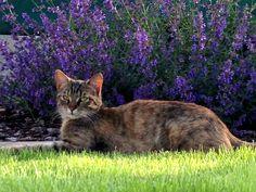 Cat & levander
