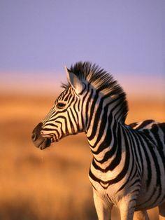 his hair... it's so cute! Namibia, Africa