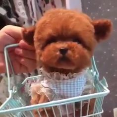Cute Baby Dogs, Cute Dogs And Puppies, Little Puppies, Pet Dogs, Cute Babies, Doggies, Toy Puppies, Little Dogs, Cute Little Animals