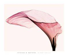 Fine art x-ray photography by Steven Meyers (24photos) - steven-meyers-3