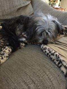 Bentley on sofa