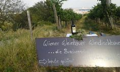 Am Nussberg! Wo der Wein zuhause ist... Chalkboard Quotes, Art Quotes, Lettering, Wine, Ad Home, Summer Recipes, Calligraphy, Letters, Texting