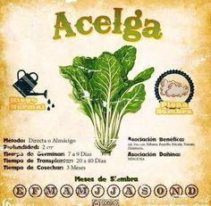 Compost, Vegetable Garden, Flora, Fruit, Vegetables, Plants, Gardening, Ideas, Tips