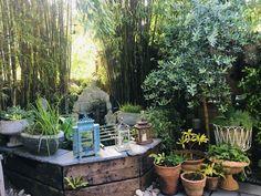Container Gardening, Patio, Outdoor Decor, Plants, Home Decor, Decoration Home, Room Decor, Plant, Container Garden
