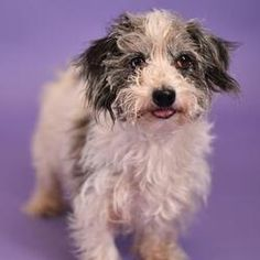 Dachshund Adoption, Pet Adoption, West Palm Beach Florida, Foster To Adopt, Safari, Pets, Animals And Pets
