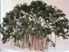 1:12 scale banyon tree by Marilyn Heath TreesbyHeath