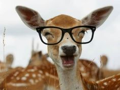 Deer hunting season approaches and YIKES! Funny Animals, Cute Animals, Animal Fun, Wild Animals, Animals Beautiful, Beautiful Things, Deer Hunting Season, Hunting Girls, Funny Hunting