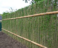 Green Barrier™ living willow hedges, sustainable and aesthetically pleasing. They provide almost instant screening, even in winter. The willow establishes very quickly after planting and creates an attractive green hedge in as little as 2 months. // Great Gardens & Ideas //