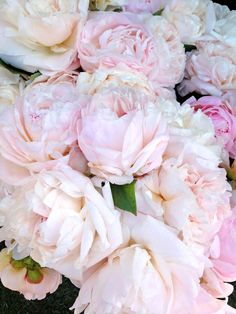 Peonies - embody romance and prosperity and are regarded as an omen of good fortune and a happy marriage.