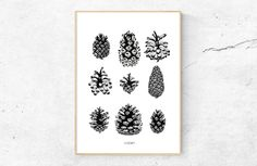 A.STORM - pine cone study  nature inspired ink illustration of pinecones collected in Oslo botanical garden and parks