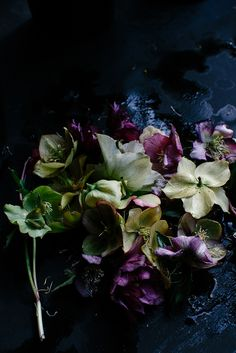 Prettiest rejects. A week old hellebores. Photoshoot for Linda Ross of The Garden Clinic. Photo by Luisa Brimble.