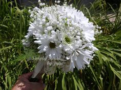 Fresh as a Daisy Bridesmaid Bouquet. Baby's Breath and White Daisies give this a fresh Vintage appeal for today's wedding flowers - Simply Regal by Julie