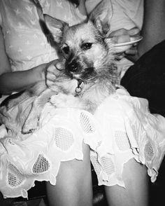 Kinga Csilla , Kramer and the cotton cutwork dress. Sarah Adamson photography