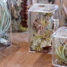Cube Aerium - Web Shop - Flora Grubb Gardens