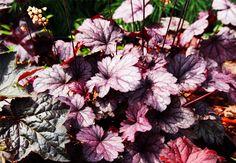 10 flerårige planter der pynter i din have og er umulige at slå ihjel Summer House, Flowers, Sunflower, Green Thumb, Flora Garden, Planters, Green, Plants, Garden Inspiration