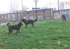 05/04/2016 - Torino con Peja e Luna