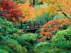 images of japanese gardens | Love of Japanese Gardens