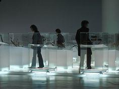 Musée du quai Branly - Transparent Cases - Bec