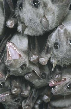 Oh, those faces!  ((Oh those teeth))