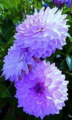 Flowers are one of the most popular subjects to color so here I have gathered a bunch of flower coloring pages for you. Many people think flowers. Exotic Flowers, Amazing Flowers, My Flower, Flowers In Hair, Colorful Flowers, Purple Flowers, Beautiful Flowers, Dahlia Flowers, Cactus Flower