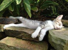 Totally worn out kitty, cat, nuttet, cute, sleeping on stone, flutty, furry, nuser, kitten, killing, pet