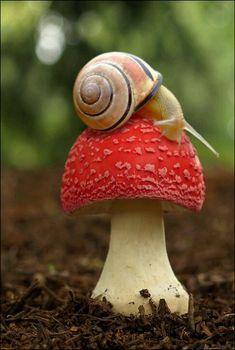 Slak op paddenstoel