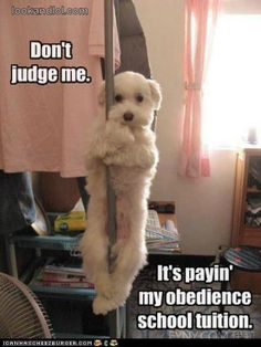 Dogs Making Money – Memes « Look and LOL
