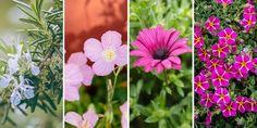 Flowers, Plants, Gardens, Outdoor Gardens, Plant, Royal Icing Flowers, Flower, Florals, Garden