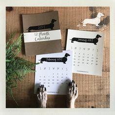 Long Doxie. 2017 Desktop Calendar  by PickleDogDesign on Etsy