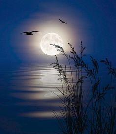 Moon Digital Art - Moon Light Silhouettes by Nina Bradica Night Sky Painting, Summer Painting, Moon Painting, Ocean Drawing, Moon Drawing, Night Sky Moon, Night Skies, Moon Over Water, Canvas Painting Projects