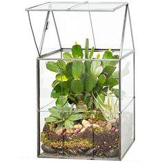 Glass Hinged Roof Terrarium, Succulent & Air Plant Greenhouse