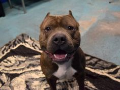 LOVESTUCK - A1100805 - - Brooklyn  TO BE DESTROYED 01/11/17**ON PUBLIC LIST!** -  Click for info & Current Status: http://nycdogs.urgentpodr.org/152755-2/