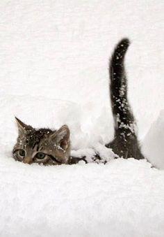 Snow Cat uses tail-radar to navigate through the drifts.