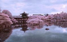Картинки по запросу сакура
