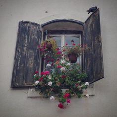 """53 Likes, 3 Comments - @misnom on Instagram: """"duvarlardaki kurşun izlerini takip et, güzel pencereler göreceksin #sarajevo #saraybosna"""""""