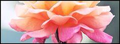 Jejejej.. Flower!!