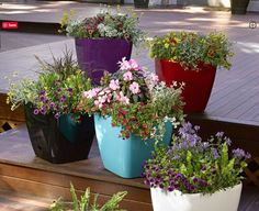 Colorful planters/Source: Gardeners website/Home Bnc website Planters, Container Gardening, Color Pop, Beautiful Gardens, Creative, Garden Ideas, How To Remove, Colorful, Website
