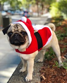 cute pug puppies To get you through your Monday! Photo by Want to be featured on. Cute Pug Puppies, Cute Pugs, Pug Love, I Love Dogs, Cute Baby Animals, Funny Animals, Doug The Pug, Pugs And Kisses, Baby Pugs