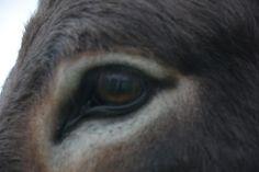 Eye Images, The Donkey, Facebook, Eyes, Twitter, Cat Eyes