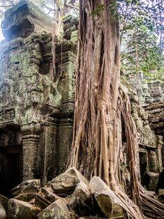A Guide to the Temples of Angkor Wat - Cambodia