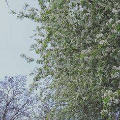#leipzig #fockeberg #seifenkiste #seifenkistenrennen #cherryblossom #DeskCenterSolutions #sundays #springtime #iloveleipzig #connewitz