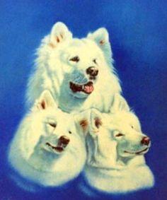 "Paintings by Vicki  ""3 Samoyeds"""