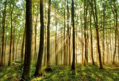 Wald Lichtung Sonne Natur Bäume Birken