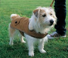 Top 10 Cute DIY Pet Clothes, not necessarily knitted or crocheted
