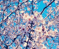 Flower Power & Infinite Spring