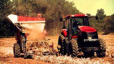 NY dry Bean Harvest 2013 pt2