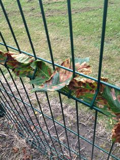 leaves weaved into a fence